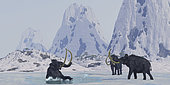 A bull from a Woolly Mammoth herd struggles for survival after he falls through the ice on a frozen lake.