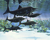 A group of Ichthyosaurs swimming in prehistoric waters. Ichthyosaurs were giant marine reptiles from the Mesozoic era.