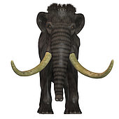 The Woolly Mammoth was a herbivore that lived during the Pleistocene Period of Eurasia and North America.