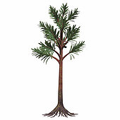 Cordaites plant on white background. Cordaites are considered the ancestors of conifers. They were plants with an arboreal shape. They could grow very high and lived during the Permian Age.