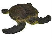 Archelon sea turtle on white background. Archelon was a giant sea turtle that lived in South Dakota, USA during the Cretaceous Period.