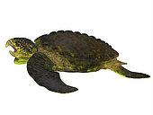 Archelon sea turtle side profile. Archelon was a giant sea turtle that lived in South Dakota, USA during the Cretaceous Period.