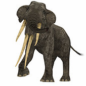 Stegotetrabelodon primitive elephant. Stegotetrabelodon was an elephant that lived during the Miocene and Pliocene Periods of Africa and Eurasia.