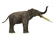Stegotetrabelodon primitive elephant, side profile. Stegotetrabelodon was an elephant that lived during the Miocene and Pliocene Periods of Africa and Eurasia.