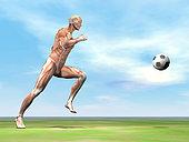 Soccer player musculature running after soccer ball on the green grass.