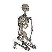 Human skeleton praying on his knees, isolated on white background.