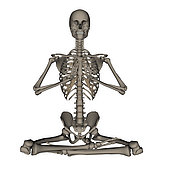 Front view of human skeleton meditation, isolated on white background.