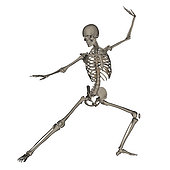 Front view of human skeleton in fighting stance, isolated on white background.