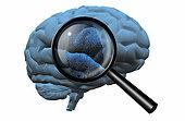 Fingerprint on brain, magnify glass.