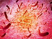 Microscopic view of sperm.