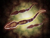 Microscopic view of male sperm cells.