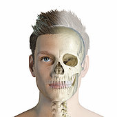 Male head with skull in ghost effect. Front view on white background.