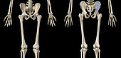 3D illustration of hip, limbs and hands of skeletal system. Front and back views on black background.