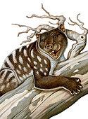 Thylacoleo, a marsupial lion from the Pleistocene Age.