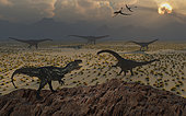 A lone Allosaurus carnivorous dinosaur spies his chance at getting an opportunity to attack a group of juvenile Diplodocus herbivores. The Allosaurus is spotted by a mature bull whose size makes it more than a match for the carnivore.