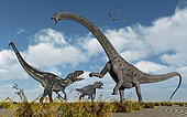 A pair of carnivorous Allosaurus dinosaurs confront a giant Diplodocus sauropod during Earth's Jurassic period of time.