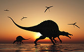 A pair of carnivorous Spinosaurus hunting for fish during the Cretaceous Period.