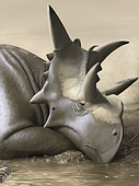 Xenoceratops foremostensis relaxing in a mud puddle.