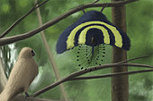 A male Xiaotingia zhengi bird tries to surprise a female.