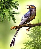 Confuciusornis bird perched on a tree limb.
