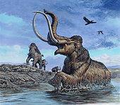 Columbian Mammoth (Mammuthus columbi) trapped by asphalt at La Brea Tar Pits, California. Pleistocene epoch (Ice Age) of North America.