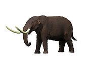 American mastodon (Mammut americanum) from the Pleistocene epoch of North America