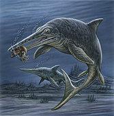 Ichthyosaurus feeding on an ammonite.