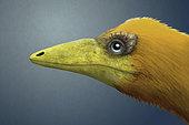 Portrait of a Sinosauropteryx.