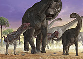 The painting shows a couple of predators has been named Tiktaalik roseae Mapusaurus, trying to isolate the herd to a young Argentinosaurus Huinculensis sauropod. Another copy of most size tries to prevent the attack.