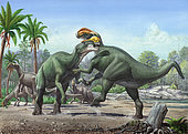 Conflict between two male Altirhinus kurzanovi dinosaurs, with a group of female Altirhinus grazing in the background.