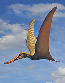 Cearadactylus atrox, a large pterosaur from the Early Cretaceous period.