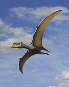 Dsungaripterus weii, a pterosaur that lived during the Early Cretaceous period in China.