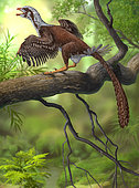 Jeholornis prima perched on a tree branch during the Early Cretaceous Period of China.