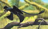 A Microraptor perched on a tree branch.