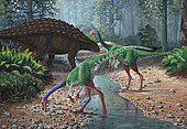 Ornithomimus dinosaurs swallowing stones along a stream as part of their diet, known as geophagy. A Panoplosaurus armored dinosaur wanders in the background.