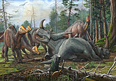 A group of young Hypacrosaurus dinosaurs approach a couple Rubeosaurus ovatus ceratopsians relaxing in the woods.