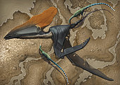 Two small Mirischia scavengers pick away at the body of a dead Thalassodromeus sethi, a large pterosaur found in Brazil.