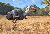 Titanis walleri, a flightless carnivorous bird from the Pleistocene epoch.