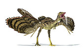 Archaeopteryx dinosaur on white background with drop shadow.