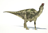 Maiasaura dinosaur on white background with drop shadow.
