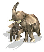 Elephants, mother and son. On white background with drop shadow.
