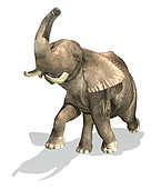 Elephant on white background with drop shadow.