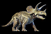 3D rendering of Triceratops with skeleton in ghost effect, on black background.