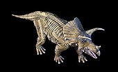 3D rendering of Triceratops with skeleton in ghost effect, on black background viewed from above.