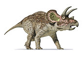 3D rendering of Triceratops on white background.