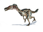 3D rendering of a Velociraptor dinosaur with feathers, isolated on white background.