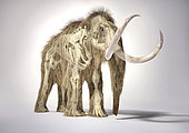 3D illustration of woolly mammoth with skeleton in ghost effect. Front perspective on white background with drop shadow.