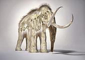 3D illustration of woolly mammoth with skeleton in morph effect. Front perspective on white background with drop shadow.