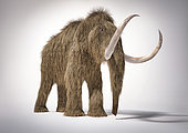 3D illustration of a woolly mammoth. Front perspective on white background with drop shadow.