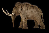 3D illustration of a woolly mammoth. Side view on black background with drop shadow.